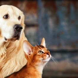 Máster Online en Derecho Animal